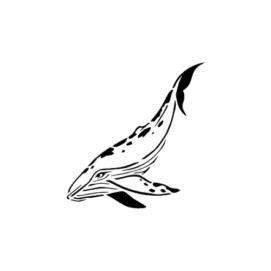 Полярный кит
